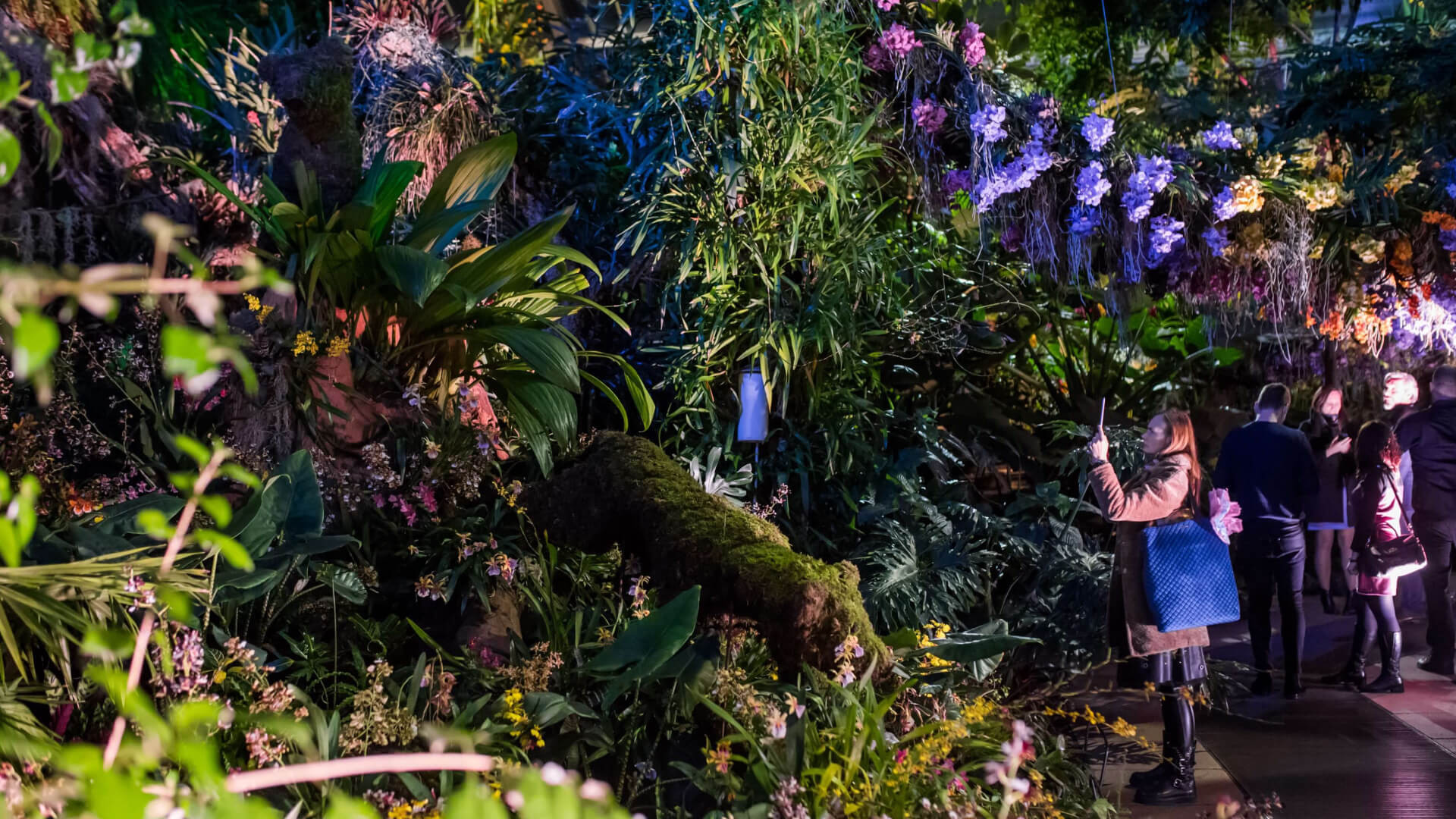 Why Kew Gardens' Orchid Festival is a MUST See this February